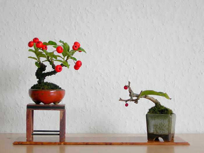Bonsai đẹp