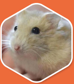 Cheezy - Hamster