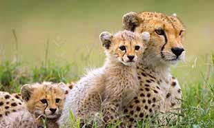 L'espèce animale est en grand danger, il faut agir et vite !