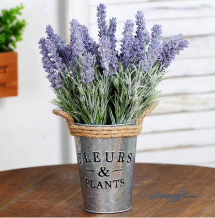 levander bedroom plants
