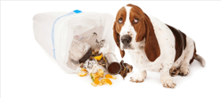 Dog in Trash