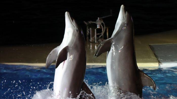 Spectacle de dauphins au Marineland d'Antibes le 7 décembre 2016