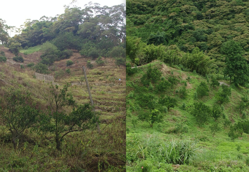 傳統農作與友善環境農法的對比