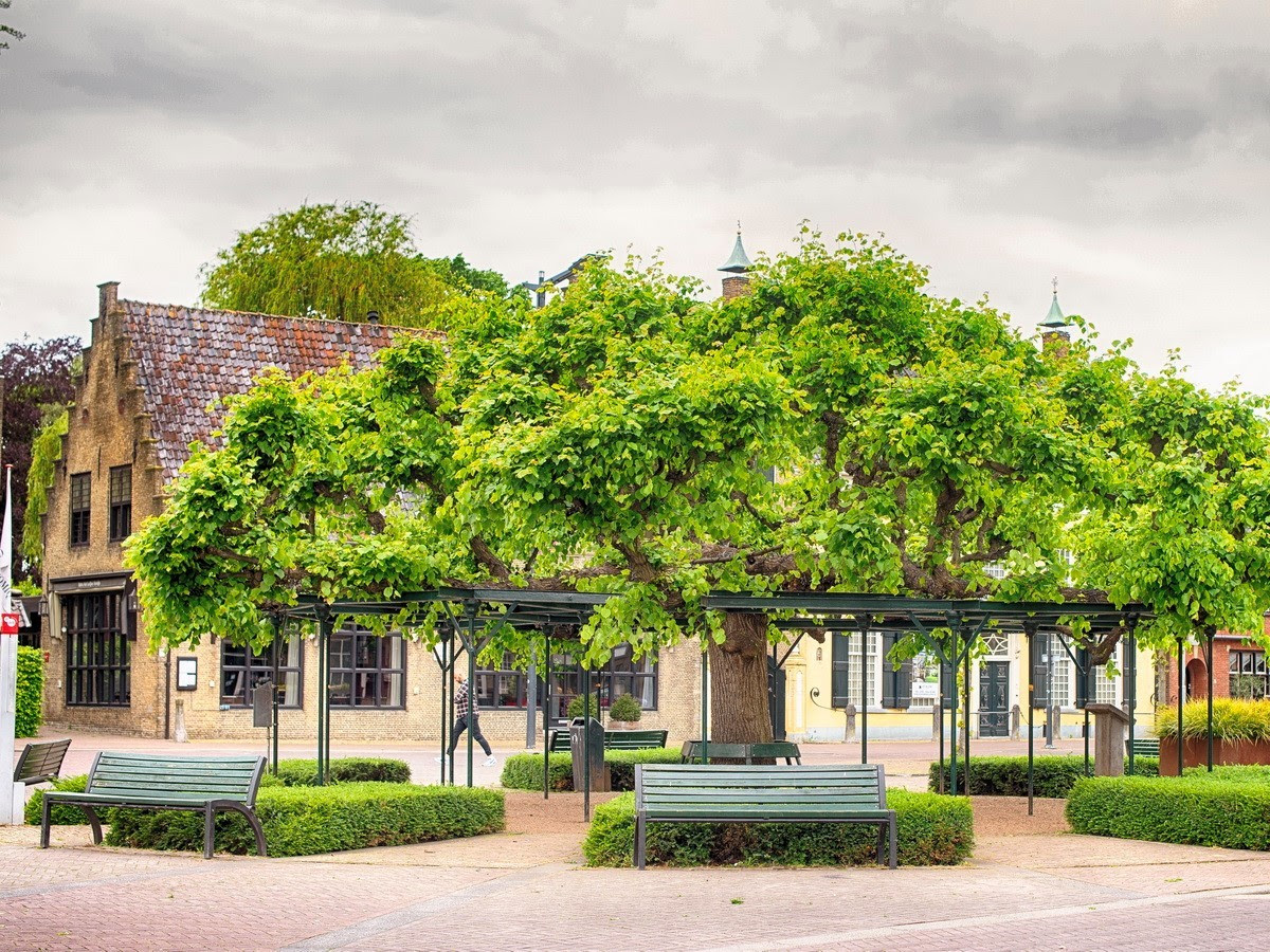 Tilo en Etten-Leur, Provincia de Noord-Brabant, Países Bajos, de 345 años, que habría inspirado a Van Gogh.