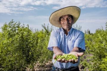 82% de las tierras dedicadas a leguminosas son de agricultura familiar