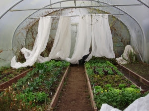 Gloom at 3pm in the polytunnel - looking a bit like a theatre set with the curtains drawn back!