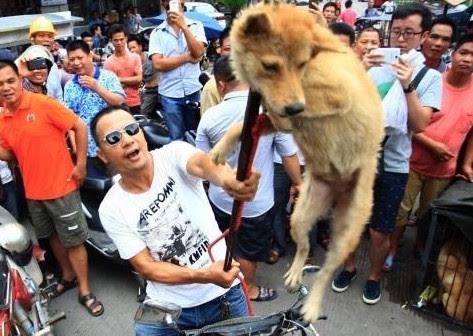 Contre la torture des chiens en Chine au festival de la viande de chien, Yulin 19521_yulin2square