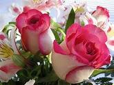 Palavramento: Havia rosas no floreiro...