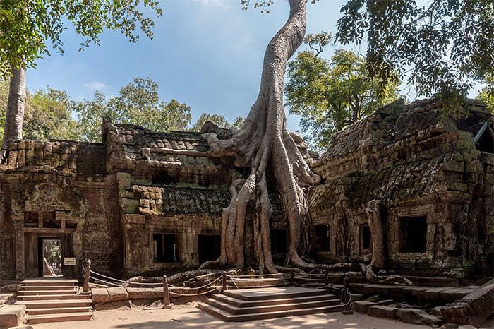 Храм Та Прум, Камбоджа дерево, живучесть, жизнь, мир, планета, растительность, фото