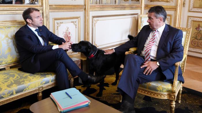 VIDEO. Nemo, le nouveau chien de Macron, s'invite à une entrevue avec le vice-chancelier allemand