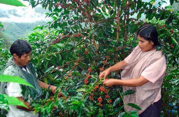 Cooperativas agrarias son responsables del 15% de las exportaciones de alimentos de Perú
