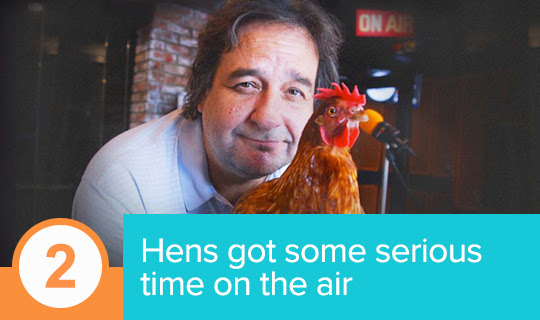 Hens went live on the air in a series of radio ads