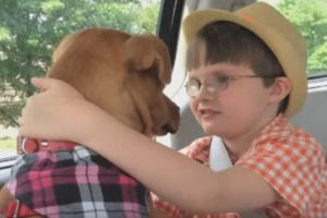 Watch What Happens When Mom Brings Home a Rescued Pitbull and She Meets Autistic Son (Video)