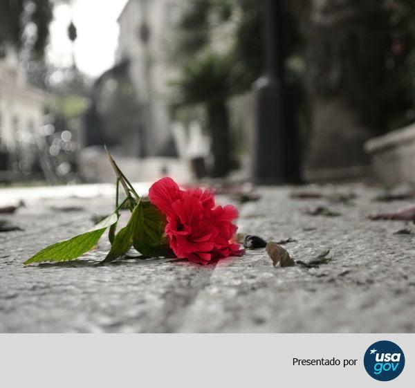 Articulo: Rosas y espinas: en este Día de San Valentín dígale no al abuso
