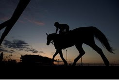 A horse trains early in the morning June 6 at Woodbine
