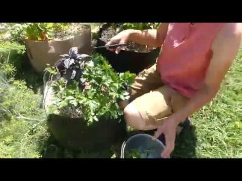 Beginning Gardener Series #17