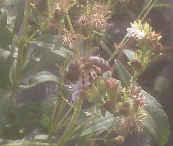 abejas 4