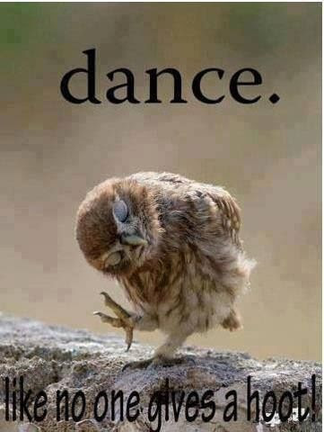 Dance funny quotes quote dance lol funny quote funny quotes owl humor