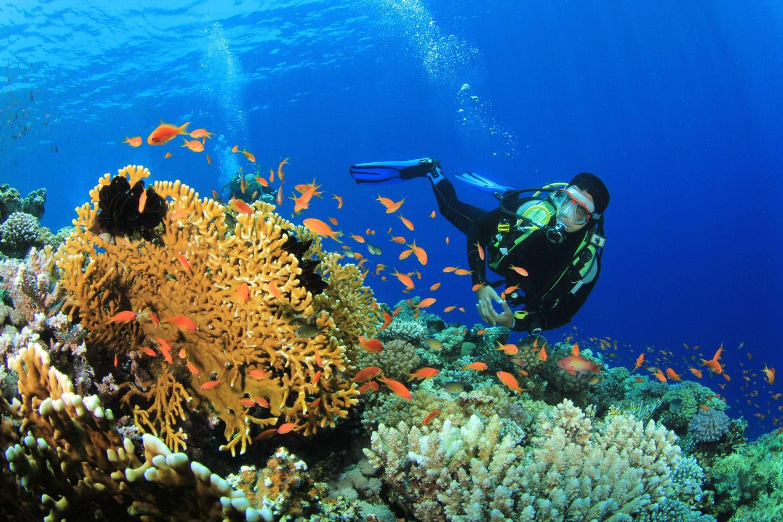 Scuba Diver, Tropikal Balık ve Mercan Kayalığı