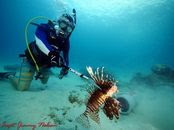 lionfish by jimmy nelson