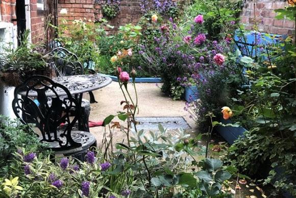 Urban English garden with roses