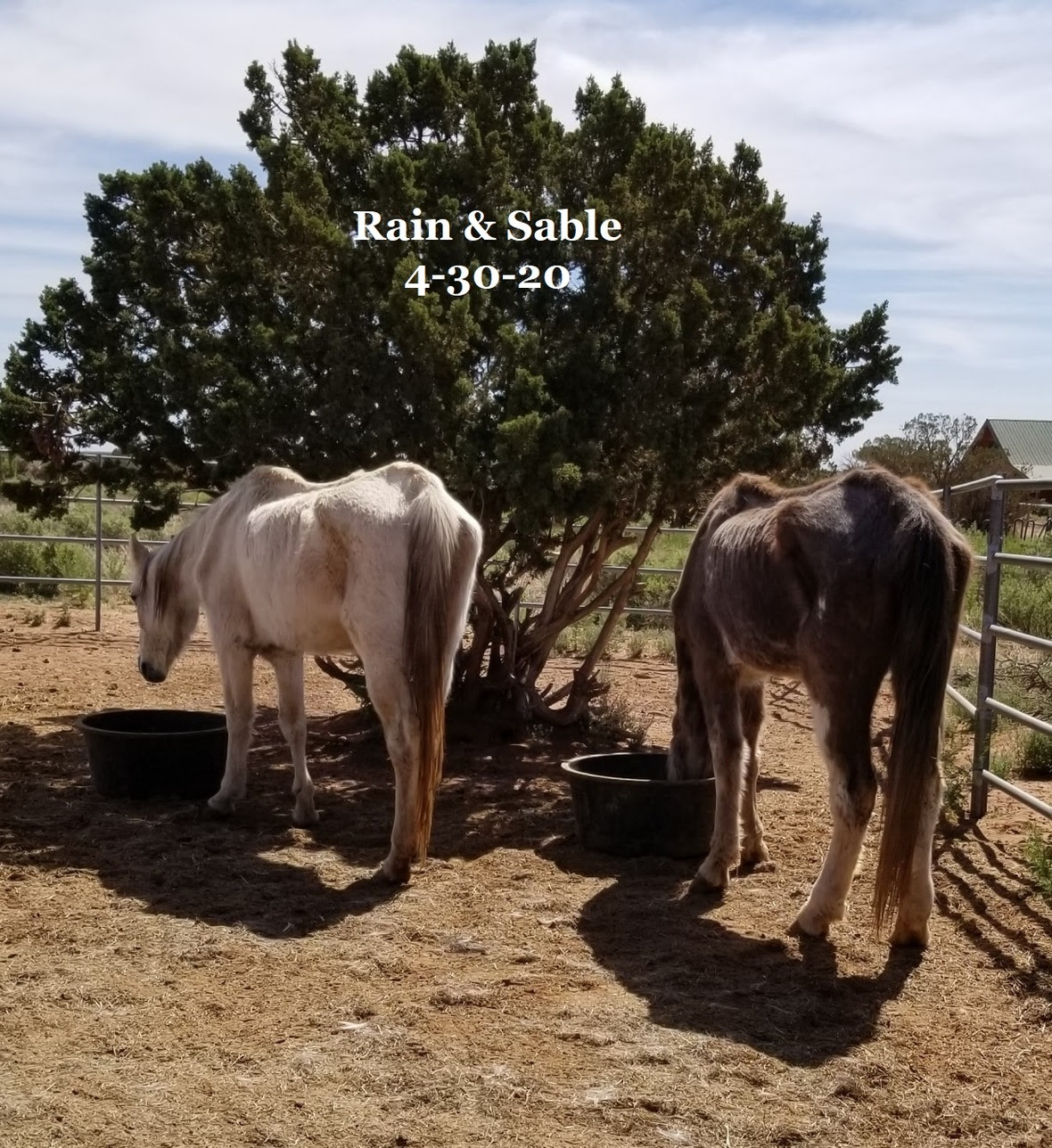 20200430 Rain and Sable
