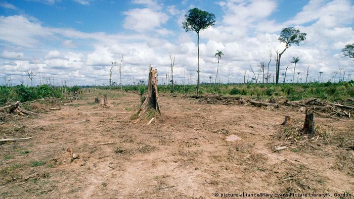 Desmatamento na Amazônia: para ecologista, origem da crise ambiental está na história do pensamento