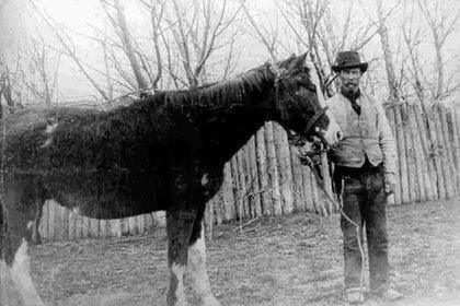 El caballo Malacara, quien le salvó la vida a  Evans en el Valle de los Mártires.