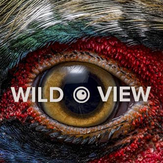 wildview blog