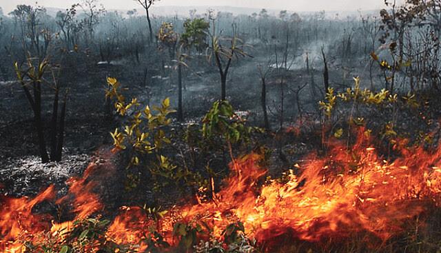 """Con la llegada del llamado """"verano amazónico"""", la selva se queda más susceptible a incendios - Créditos: Foto: Alcaldía de Diamantino (Mato Grosso)"""