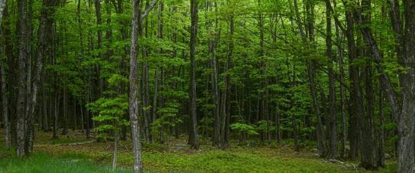 forest header