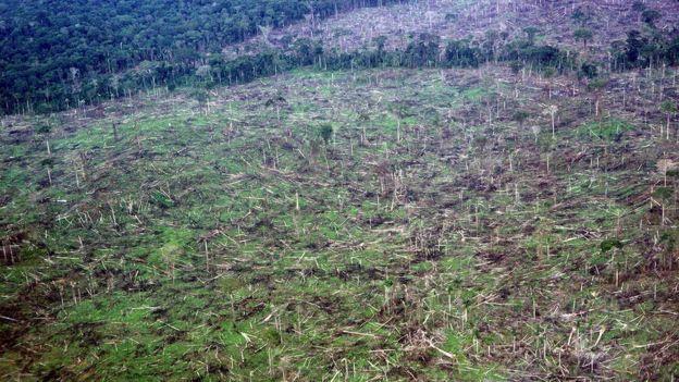 Desmatamento da Amazônia no Brasil
