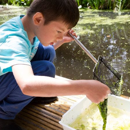 A boy examining his findings from pond dipping