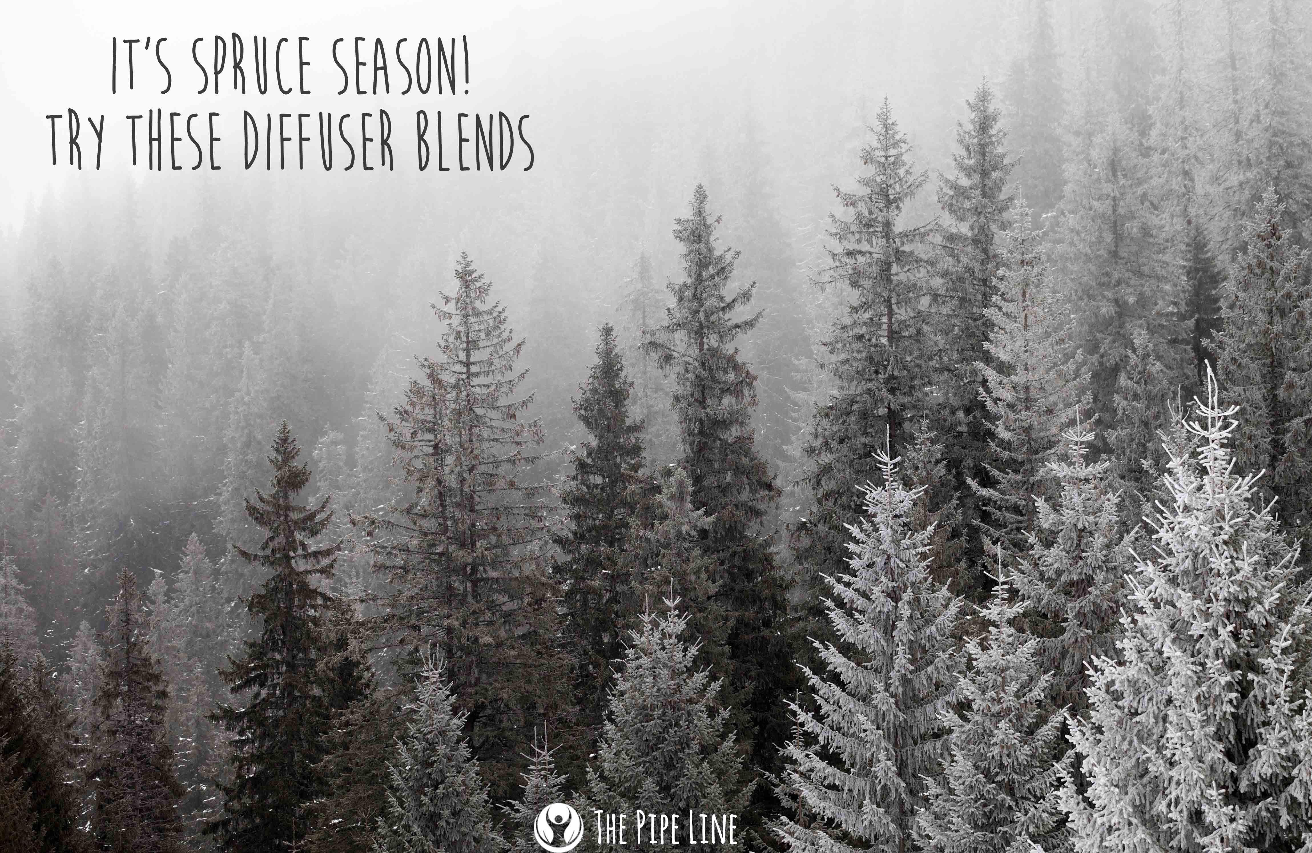 It's Spruce Season! Celebrate.