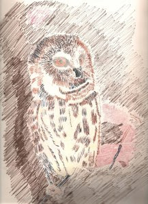 Owl Sketch courtesy of James C. Hill