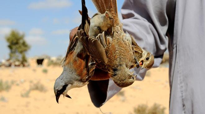 Egipto, caza de aves