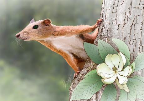 Risultati immagini per il primo mammifero a forma di topo