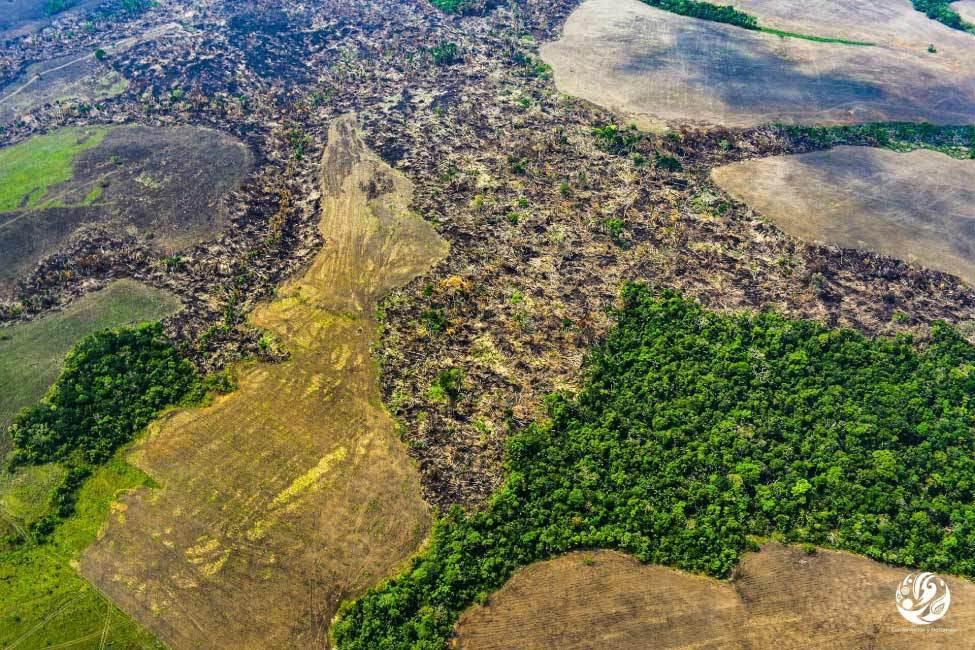 bosque-dehectareas-deforestacion-deforestacion-participacion-ciudadana-Rodrigo-Botero