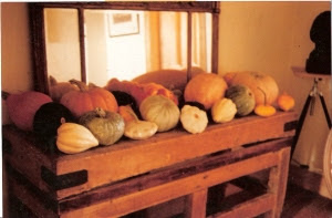 My display of long keeping pumpkins and winter squashes grown here in 1991 (photo by Joy Larkcom)