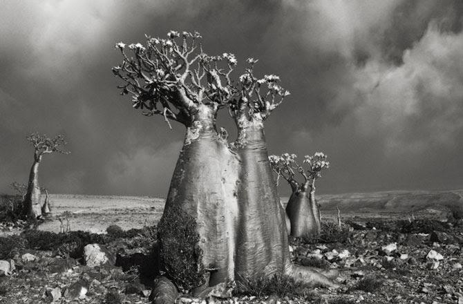 Hình ảnh Chiêm ngưỡng những loài cây hoang dã già cỗi nhất trên thế giới số 3