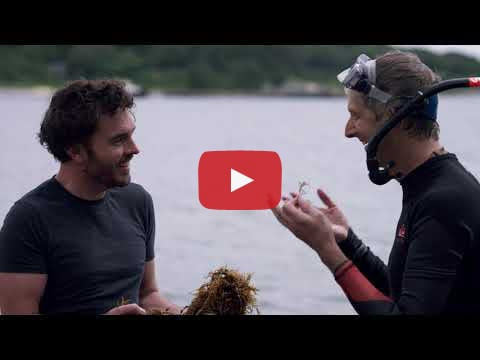 We hit our target! Seaweed announcement