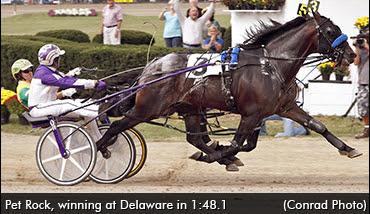 Pet Rock Empire Stallions Rocknroll Hanover