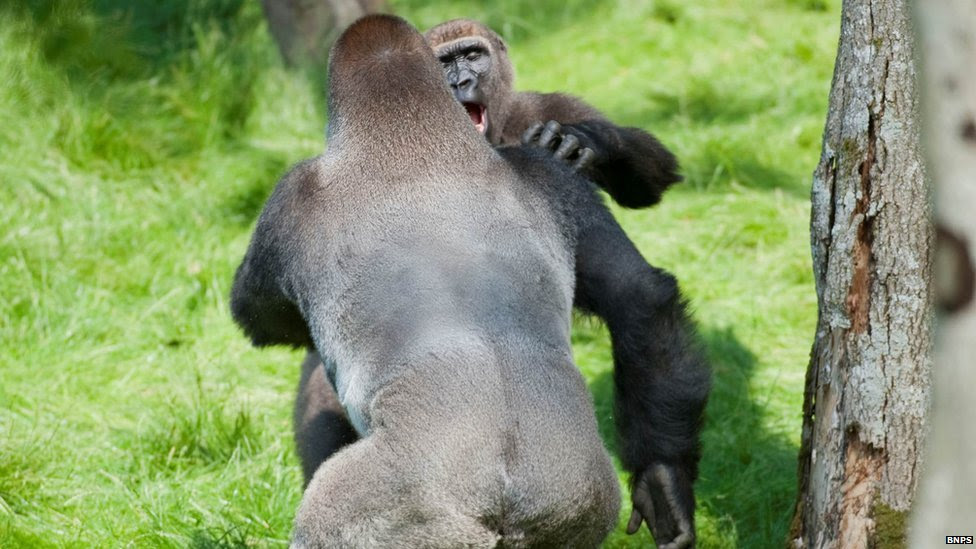 Kesho (on the left) and Alf embrace each other in a hug at Longleat Safari Park
