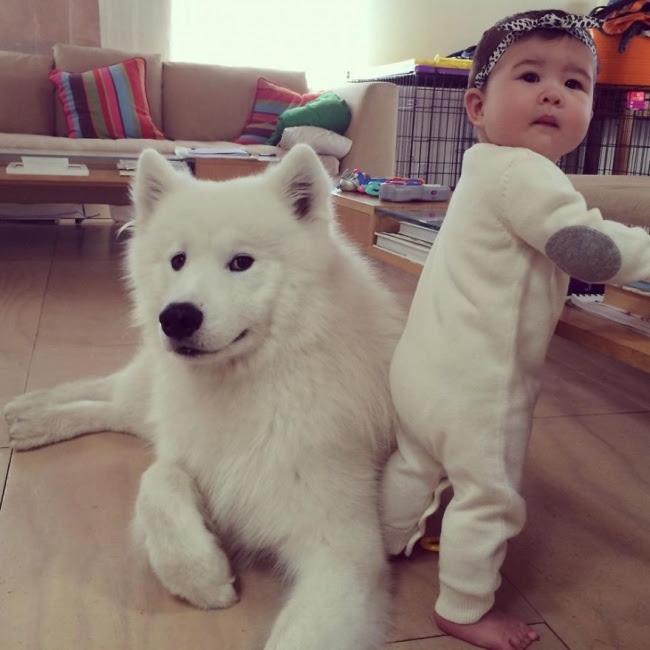 http://s.fishki.net/upload/post/201412/02/1339454/10384060-r3l8t8d-650-small-babies-children-big-dogs-27__880.jpg