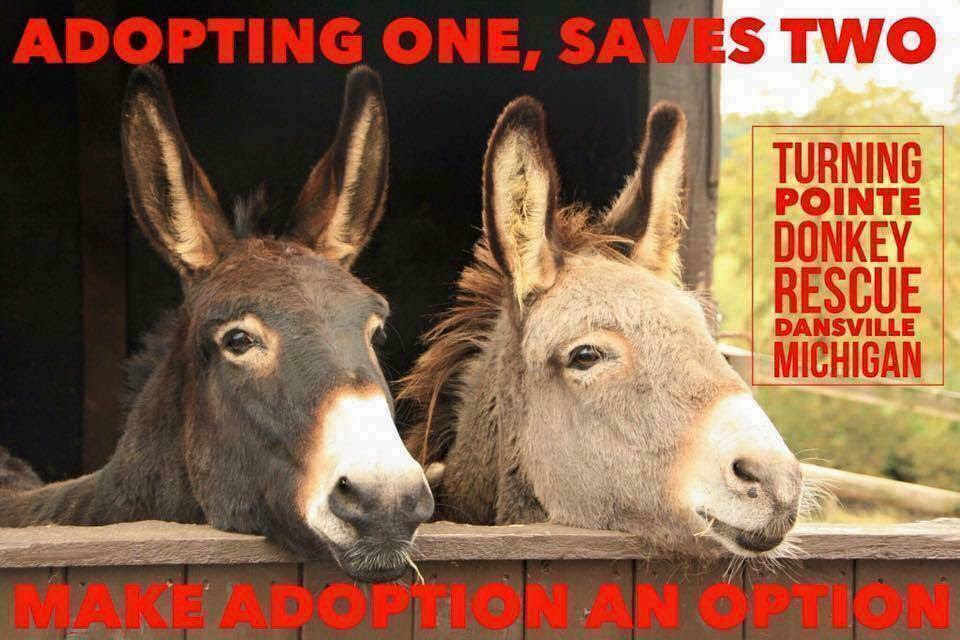 Turning Point Donkey Rescue