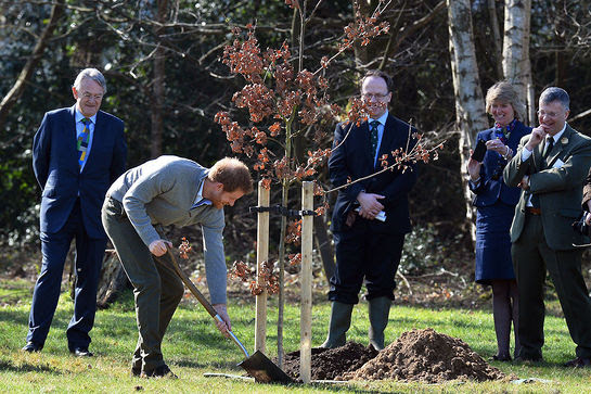 Prince Harry planted a tree under the Queen's Oak