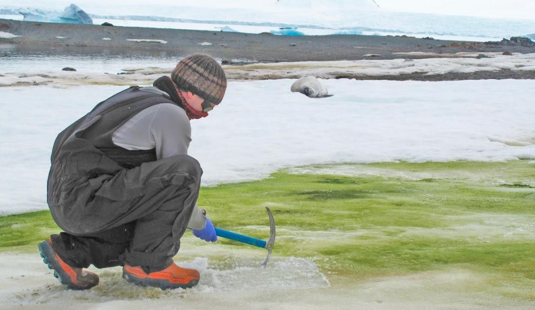 Fotografía facilitada por la Universidad de Cambridge del investigador Matt Davey tomando muestras para el estudio en la Antártida. EFE