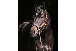 Take Charge Indy at WinStar Farm
