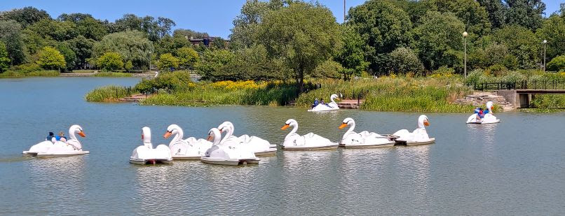 swan paddle boats SMALL.jpg