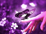 Purple Butterflies ♡ - Butterflies Photo (35243885) - Fanpop